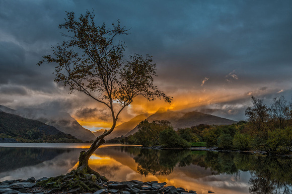 llanberis lonely tree snowdonia sunrise llyn padarn north wales photo