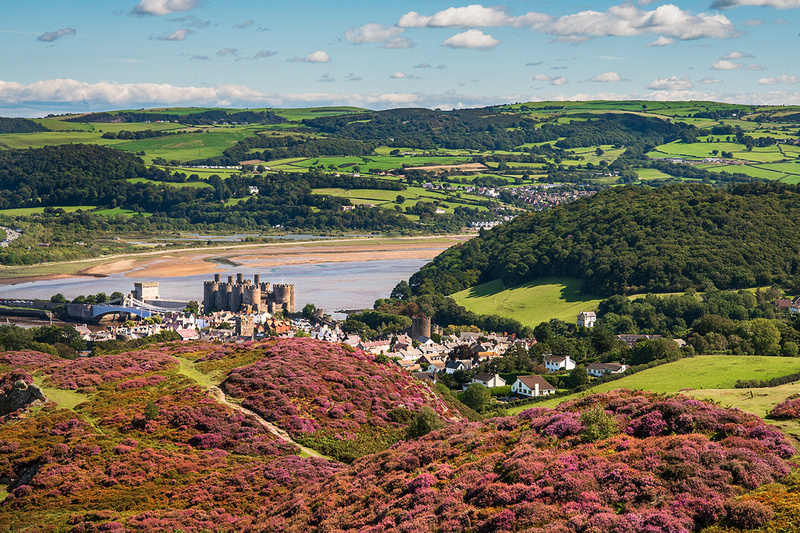Heather clad conwy mountain and conwy castle photo