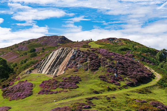 Conwy mountain summer heather north wales photo
