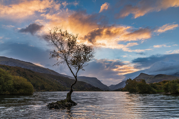 Llanberis Lonely Tree Snowdonia and an autumn sunrise