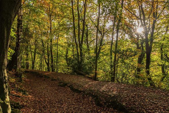 Loggerheads Country Path autumn on the Leete Path