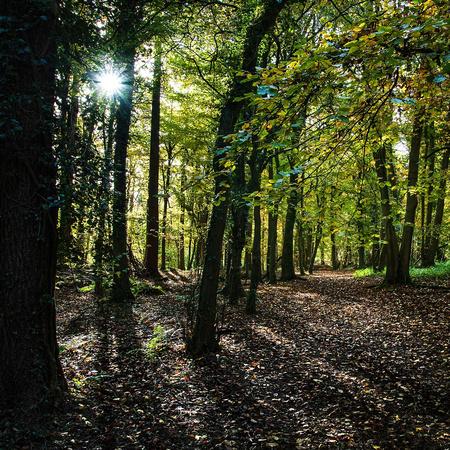 Loggerheads Country Park autumn woods