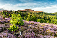 Moel Famau Clwydian Hills heather sunset photo north east wales