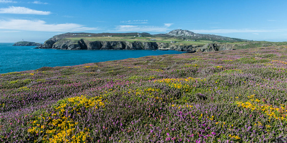 south stack lighthouse holyhead mountain summer heather anglesey photo