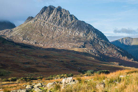 tryfan photo sheep autumn north wales snowdonia mountain sunrise morning heather terrace