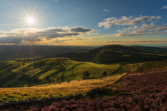 moel arthur hill fort heather bloom photo north east wales clwydian hills