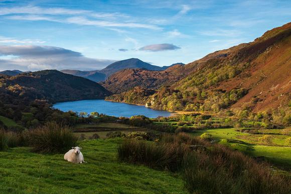 llyn dinas autumn wales snowdonia sheep lake reflections view mountains